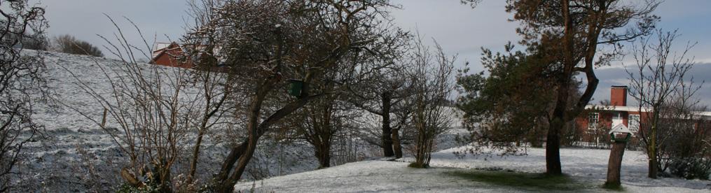 H_Garten_Schnee